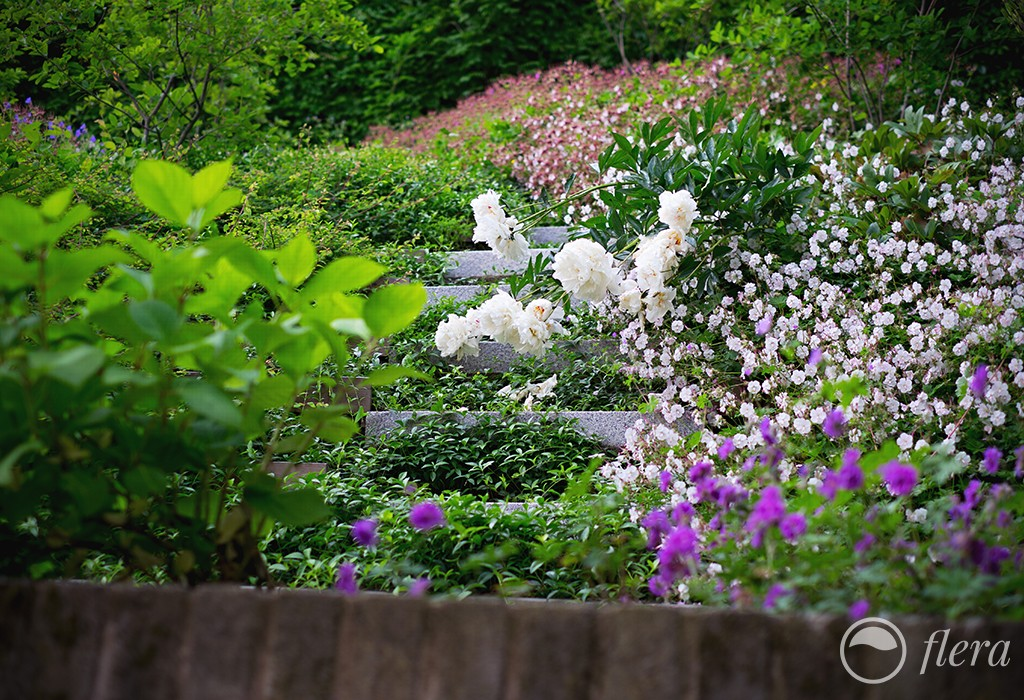 zahrada ve svahu6